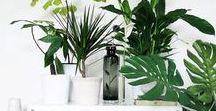 Plantes vertes d'intérieur / Succulentes, cactus, ssparagus, philodendron monstera, ficus... faisons rentrer la nature à l'intérieur avec de belles plantes vertes d'intérieur.