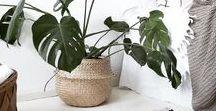 La nature s'invite à l'intérieur • Indoor nature / Chez Denovo, on aime les intérIeur lumineux et épurés où la nature s'invite grâce à de belles plantes vertes.