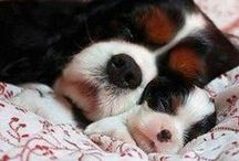 Cute pets / by Mandy Mapes