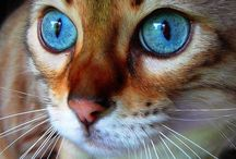 HERE -- Kitty, Kitty, Kitty)))))) / by Nancy Orend