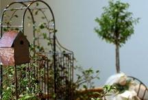 Tanglewood Gardens / by Elizabeth