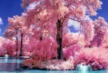 jeg liker bare ting hvis de er rosa