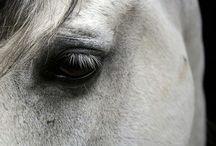 All things horse / by Christina Schmiegelow-Sutherland
