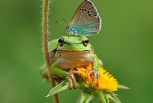 Butterfly, Bird, Bat & Bee attracting Garden