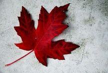 Cuz I'm Canadian / by Christina Schmiegelow-Sutherland