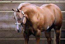 Love Horses / by natalie jenkins