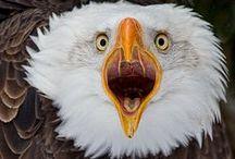 OISEAUX / BIRDS / Du plus petit au plus gros. / by JULES le FRANCS