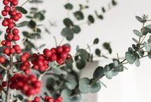 Feiertage // Advent & Weihnachten / Rund um den Advent und Weihnachten: Inspiration, feierliche Dekoration, Weihnachtsbäume, Eukalyptus Kränze, backen im Advent, hübsche Winterbilder