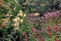 rostliny / kombinace