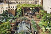 městské zahrady