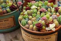 Succulent Planters / Толстянковые и другие виды суккулентов дома и в саду