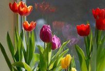 Gardening / How are you gardening? Tipps for hobby gardeners