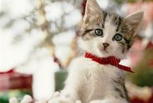 Fashionable Kitty / The most fashionable cats on Pinterest!
