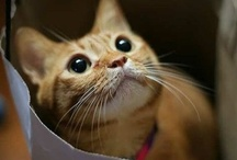 Fantastic Feline Friends / Pretty kitty cats for all, spread the Caturday love <3  / by Karii Kosmos