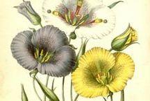 Flore des serres et des jardins de l'Europe, vol. 2-1846 / Illustrazioni botaniche