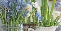 Bloem- en plantendecoraties / Bloemen
