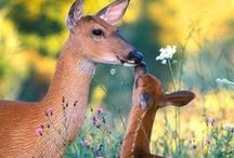God's Sweet Creatures