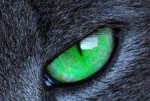 CAT. / I love cat, i love every cat.