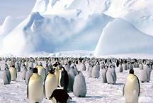 Reis Zuid Amerika / Voorbereiden op reis naar Zuid Amerika (incl. Antartica).....