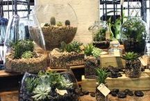 Plants & Orchids / From miniature succulents, fresh green plants, terrariums to delicate orchids, this seasons plants are filling up the Gramercy Park Flower Shop stores!  Stop by one of our three locations or visit our website to view these plants and orchids that will warm up any home or office.