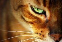 Cats, kittens ♥