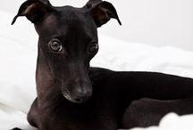 Looks Like Jet / Dog pix that look like my rescue dog, Jet <3