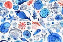 Shells / Nautical / Coastal / Shells and Sealife.