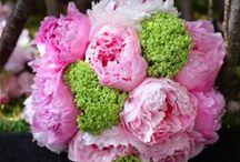 Bouquets / Bouquet inspiration & our own bouquet arrangements.