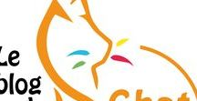 Le blog du Chat Roux / Les astuces, la revue de presse, le Ciné-club. Venez visiter notre blog et découvrir ce qui nous fait avancer, vibrer, rêver. #leblogduchatroux https://www.lesfilmsduchatroux.com/le-blog-du-chat-roux/ #lesfilmsduchatroux