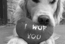 (ᵔᴥᵔ) I Woof You!  (ᵔᴥᵔ) / It is a dogs life on this board.... Thought we would make this a Group Board too.. THREE A DAY - love the mono ones ;-)  / by Life☆Portraits