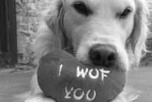 (ᵔᴥᵔ) I Woof You!  (◐.̃◐) / It is a dogs life on this board.... Thought we would make this a Group Board too.. THREE A DAY - love the mono ones ;-)  / by Life Portraits (◐.̃◐)