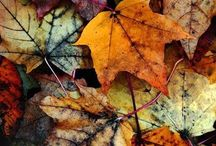 Autumn's Arrived / Colours of Autumn indoors - inspiring images and colour ideas for bringing seasonal elements into homes