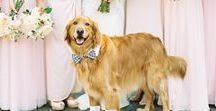 Our Best Man - Dog Ring Bearers / Man's best friend can also be the wedding's ring bearer