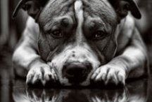 Animalia-