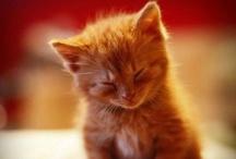 Cuddly Kitties.... / by Tracy Elliott