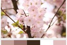 Color Schemes.