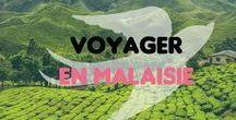 Voyager en Malaisie / La Malaisie... le mix des cultures, le street art, les plantations de thé, les îles ! On y va ?