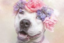 Save Pitties Bullies Boxers Staffies! / Since pit bulls, pit & bull mixes, staffies & bully breeds (plus black animals) are the most overlooked & underadopted in kill shelters, I started this board. OK 2 pin related mixed bullies & bull breeds. Message me if you wish 2 join this board. Please feel free 2 invite friends.