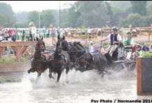Driving / Attelage / Driving : 4-7 September 2014 in Caen / by Alltech FEI World Equestrian Games™ 2014 in Normandy.