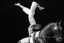 Vaulting / Voltige / Vaulting: From 2 to 5 September 2014 in Caen