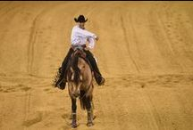 Reining / Reining : 25-30 September in Caen / by Alltech FEI World Equestrian Games™ 2014 in Normandy.