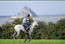 Endurance / Endurance : Thursday 28 August 2014 / by Alltech FEI World Equestrian Games™ 2014 in Normandy.