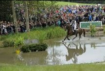 Eventing - Concours Complet / Eventing / Concours Complet : 28-31 August 2014 in Le Pin National Stud and Caen  / by Alltech FEI World Equestrian Games™ 2014 in Normandy.