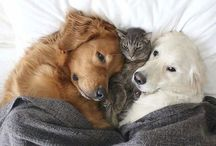 •dog and cat•