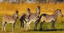 Travel Africa / Travel inspiration for Africa.