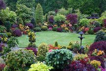 Gardening / by Kristen Hug