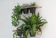 kwiatki/ plants