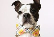 Dapper Dogs / A look at some of the more dapper dogs out on the interwebz.