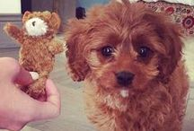 Pets Of Instagram / Let us introduce you to the funniest & cutest Instagram pets!
