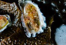 Under the sea / Seafood / by Randi Boston